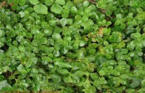 plants7