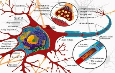 Admissions to PhD &Integrated PhD in Neuroscience with fellowship